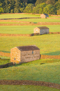 Gunnerside Meadows, Yorkshire Dales
