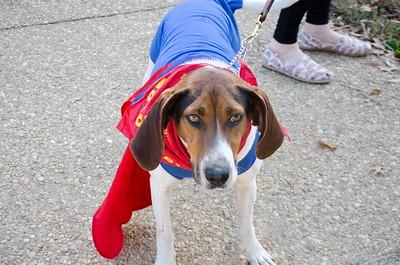 10-28-17 Rural Dog Halloween-8373