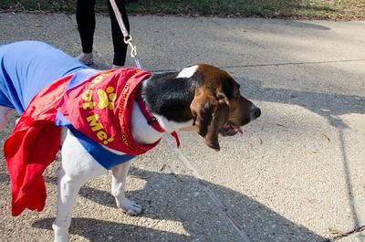 10-28-17 Rural Dog Halloween-8374