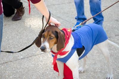 10-28-17 Rural Dog Halloween-8444
