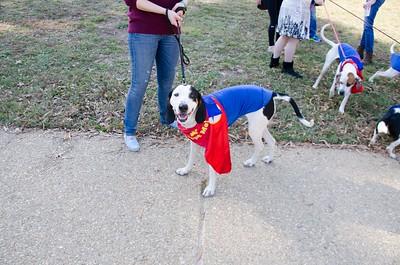 10-28-17 Rural Dog Halloween-8369