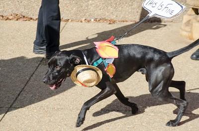 10-28-17 Rural Dog Halloween-8389