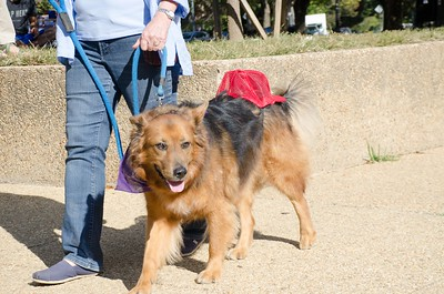 10-28-17 Rural Dog Halloween-8403