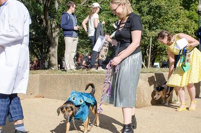 10-28-17 Rural Dog Halloween-8408