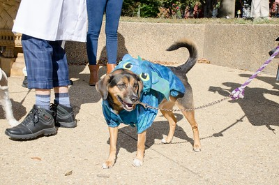 10-28-17 Rural Dog Halloween-8409