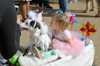 10-28-17 Rural Dog Halloween-8590
