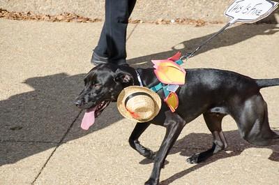 10-28-17 Rural Dog Halloween-8390