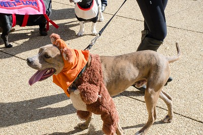 10-28-17 Rural Dog Halloween-8383