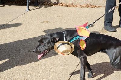 10-28-17 Rural Dog Halloween-8391