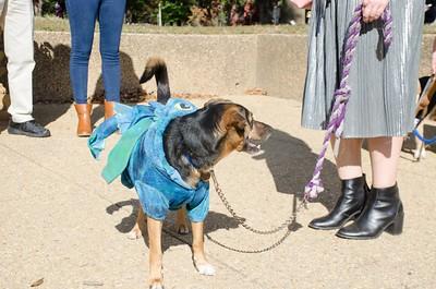 10-28-17 Rural Dog Halloween-8410