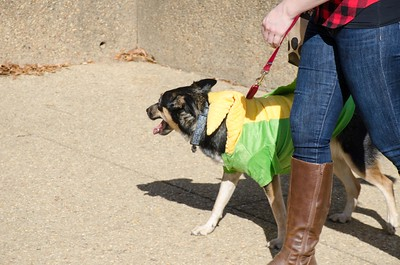 10-28-17 Rural Dog Halloween-8399