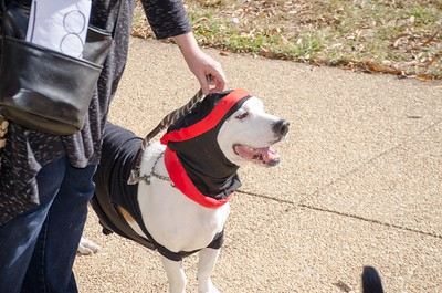 10-28-17 Rural Dog Halloween-8386