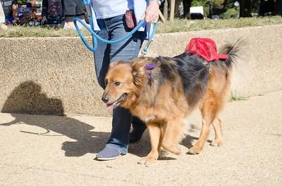 10-28-17 Rural Dog Halloween-8402