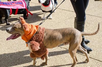 10-28-17 Rural Dog Halloween-8384