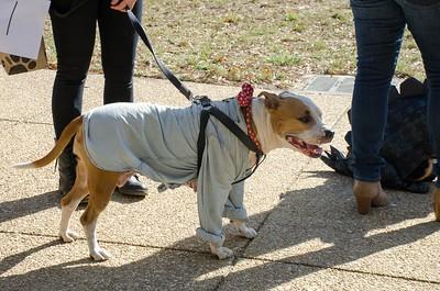 10-28-17 Rural Dog Halloween-8381