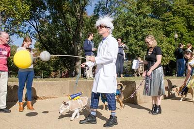10-28-17 Rural Dog Halloween-8407