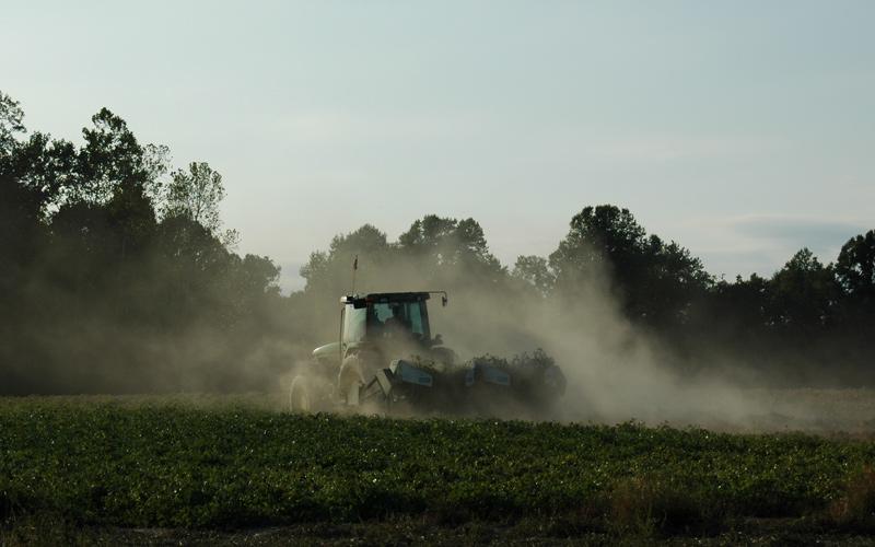 Harvesting the Peanuts, <br /> Byrum Farm<br /> Tomlin Hill Drive, Zuni, VA