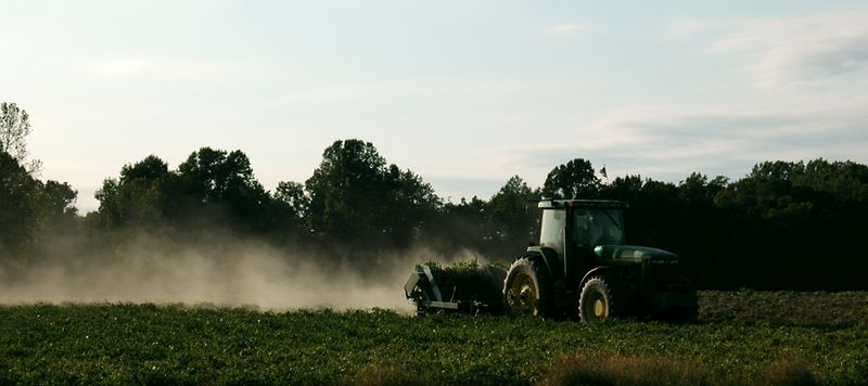 Harvesting the Peanuts, <br /> Byrum Farm<br /> Tomlin Hill Drive, Zuni, VA