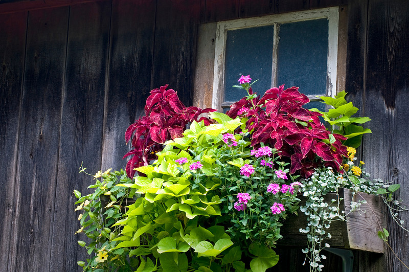 RL 014                       A window box of beautiful flowers dresses up a weathered barn near Galena, IL.