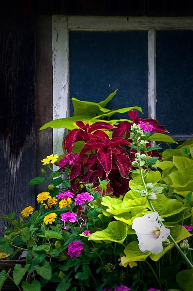 RL 013                     A window box of beautiful flowers dresses up a weathered barn near Galena, IL.
