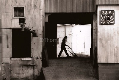 Farm Cooperative, feed mill, Good Thunder, MN, ca. 1990.