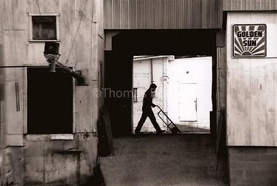 Farm Cooperative, feed mill, Good Thunder, MN, ca. 1990.