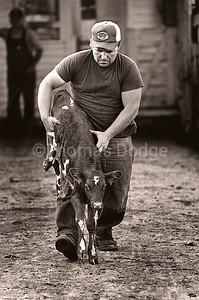 Sale Barn, Truman, MN, 1978