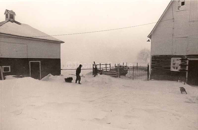 Blizzard Chores, Truman, MN, 1976