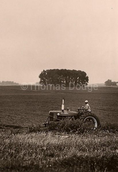 Summer Cultivating, Truman, MN, 1982