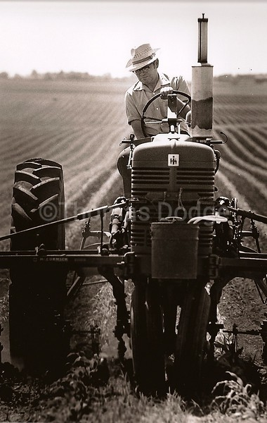 Cultivating Corn, Dad and Super M, Truman, MN, 1982