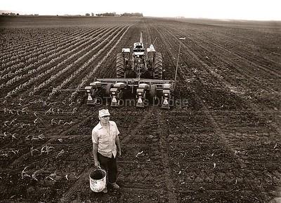 Planting Beans, Truman, MN, 1982