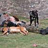 Sleeping in the sunshine outside the splendor of the Bishop's Palace this man and his 2 dogs were regulars for a while The other side of life in Wells, these people come and go, I rarely know their names but like to take the time to talk with them