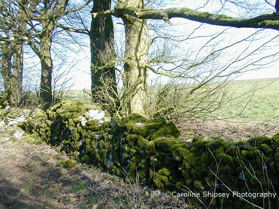 Mendip Dry Stone Walls before repair