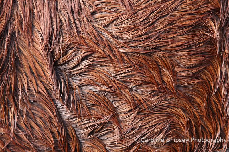 Dried Sweat makes beautiful patterns