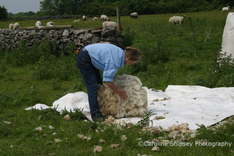 Shearing out in the field on the Mendips - the sheep belong to Harry Cox and Christine Duckett, the shearer is I believe Arthur Cowling .  Sheep shearing on the Mendips