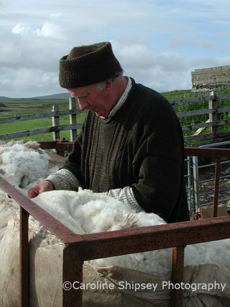 Shearing sheep using a mobile unit that travels around the island