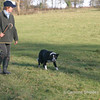 Sheep Dog Trial held Nov 2005 at Fernlea Farm