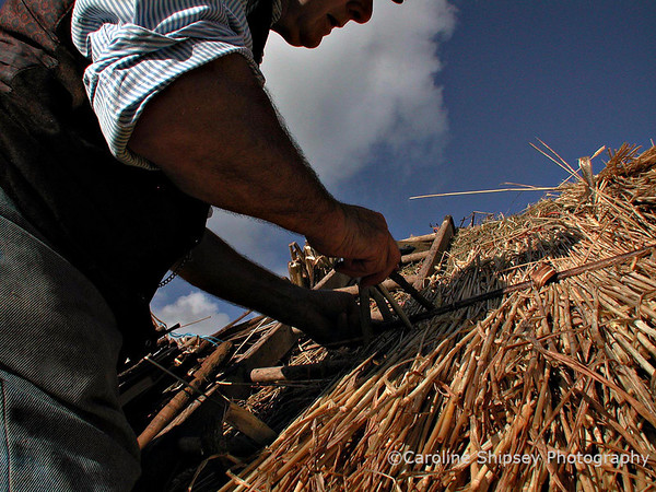 Re-thatching the hurdles on the green at Priddy by Norman Grimes