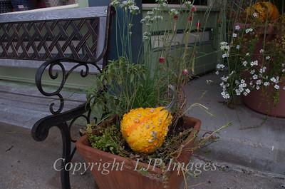 Fall gourd along Main Street in Weston, Missouri
