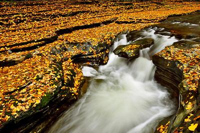 Autumn Leaves in Watkins Glen.