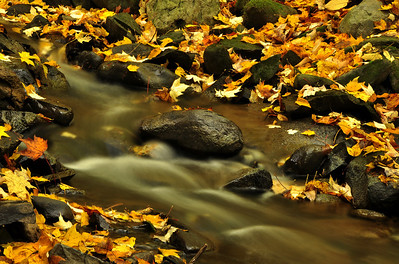 Fallen Leaves on a Small Creek, Albany New York