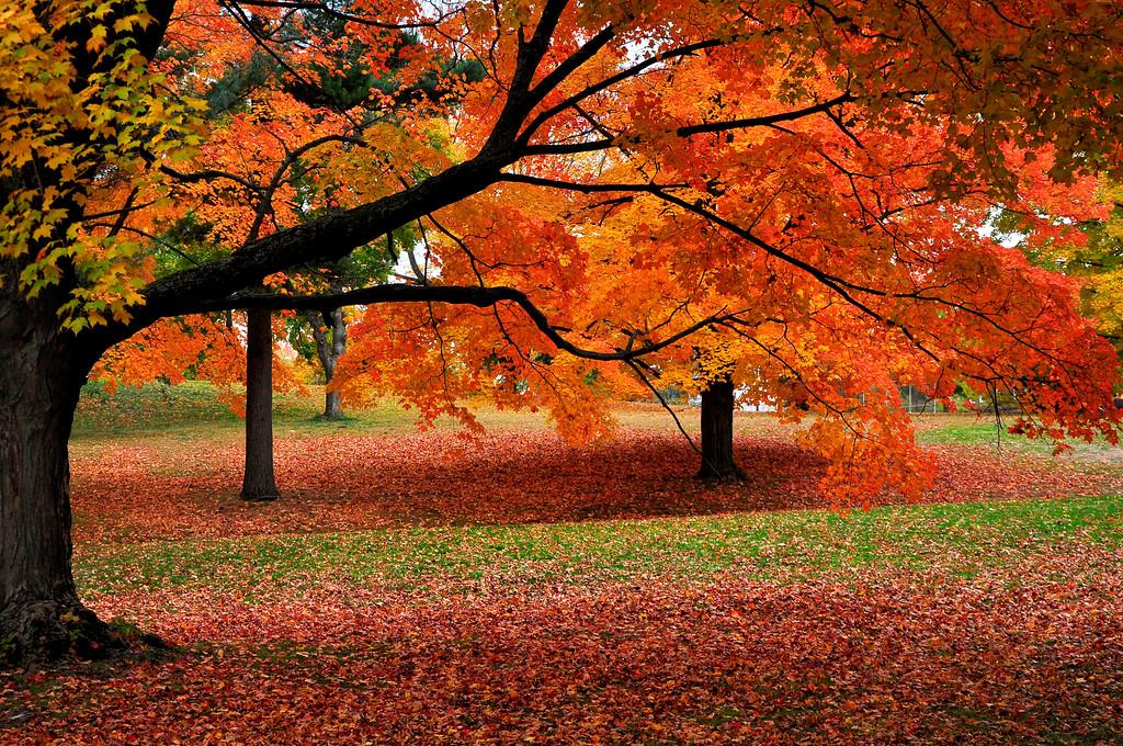 Fall foliage in New York