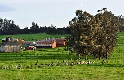 cows-pasture-barn-2