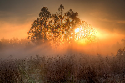 field-sunrise-1-2