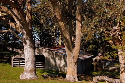 barn-trees