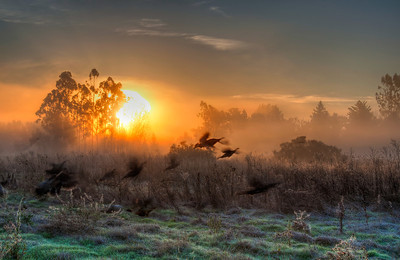 turkeys-fog-field-sunrise-1