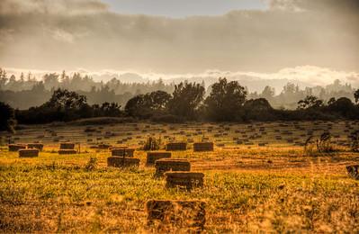 hay-bales-pasture-3