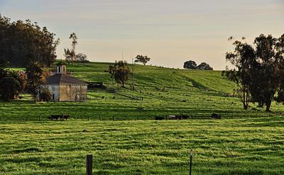 cows-pasture-barn