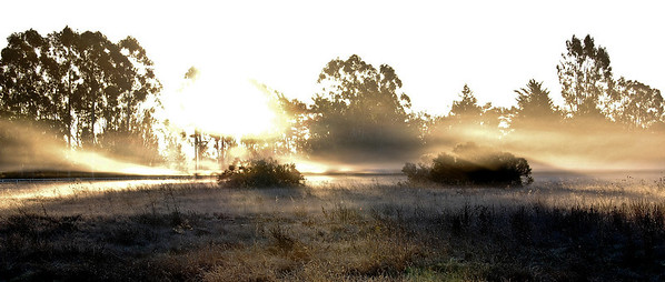 fog-sun-pasture