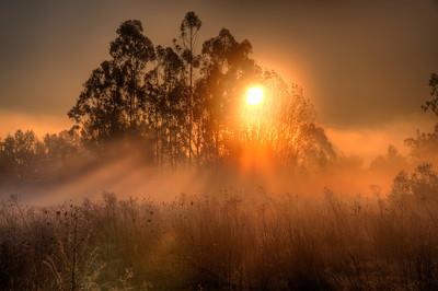 sun-fog-field-1